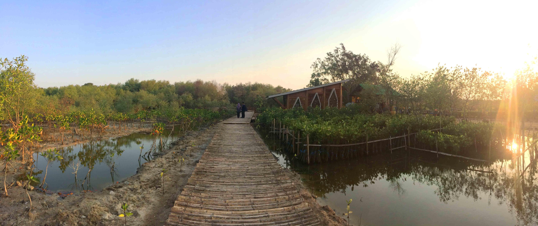 Hutan Mangrove Gununganyar